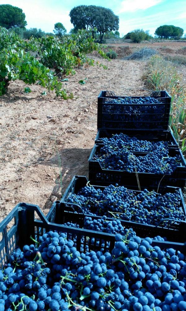wineries gratias natural